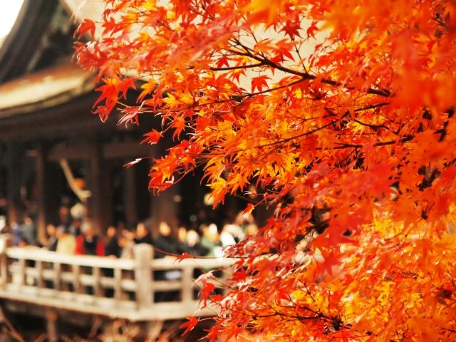 京都らしい食べ物を修学旅行で味わおう!こんなお店がおススメ!