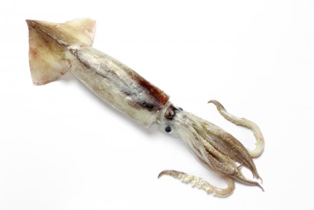イカを刺身にした時に余ったゲソはこうすれば美味しく食べれます