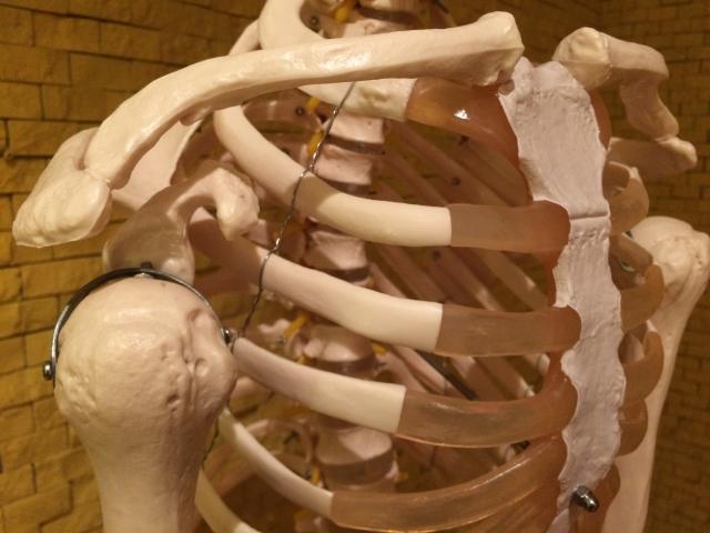 肋骨骨折…いつから運動ってOK?肋骨骨折と運動の時期について